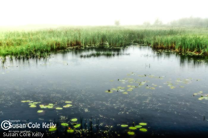 Pond on a foggy morning.
