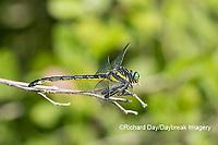 06447-00202 Dragonhunter (Hagenius brevistylus) NN Fen Ripley Co. MO
