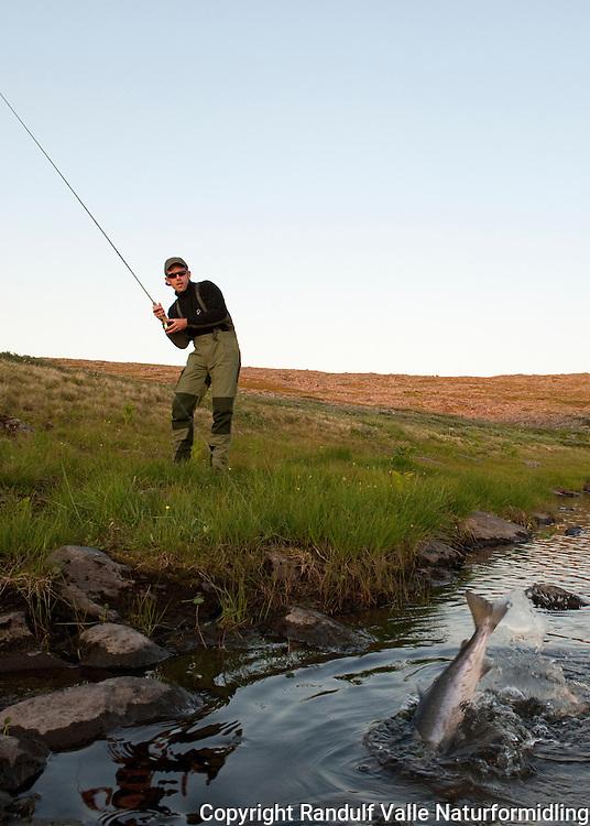 Fluefisker kjører smålaks. ---- Man fighting small salmon.
