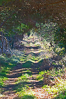 Chateau Pech-Redon. La Clape. Languedoc. A country track road. France. Europe.
