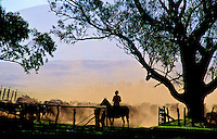 Cowboy working the cattle herd on Parker Ranch, Waimea (Kamuela), Island of Hawaii