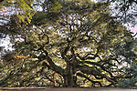 Angel Oak Tree Johns Island Photography