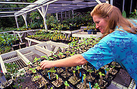Nursery at National Tropical Botanical Garden, Kauai, propogation of endangered native plants, horticulturist Kerin Rosenberg.