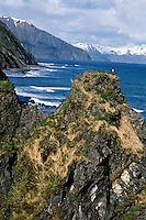 Bald eagle nest along coastal shore of Kodiak Island (Kodiak National Wildlife Refuge), Alaska.