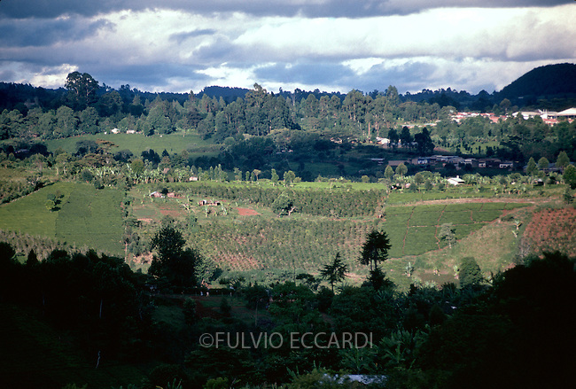 coffee, coffea, arabica, variety, plantation, plant, tree, bush, foliage, grow, organic, landscape, aerial, house