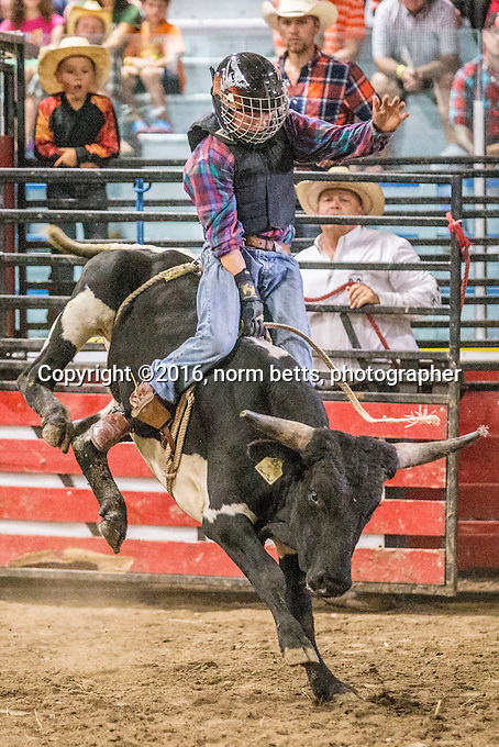 The MAYOR's CHARITY RODEO, the Ultimate Rodeo Tour in Alliston, Ontario, Canada, 10 &amp; 11 September, 2016<br /> photos by Norm Betts<br /> normbetts@canadianphotographer.com<br /> &copy;2016, Norm Betts, photographer<br /> 416 460 8743