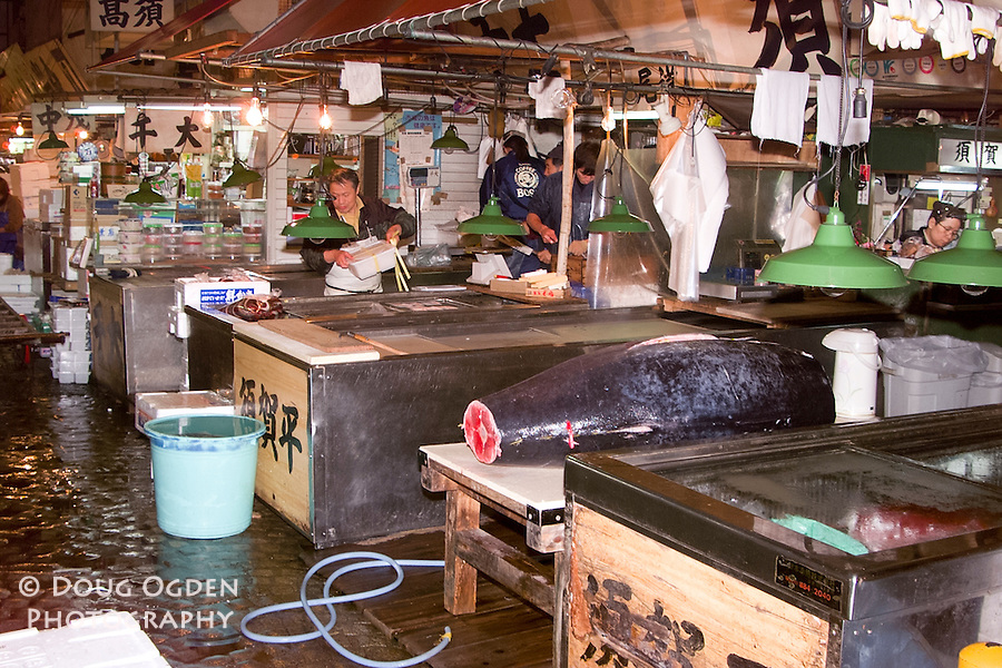 One Tuna to be processed after sale, Tsukiji fish market, Tokyo Japan