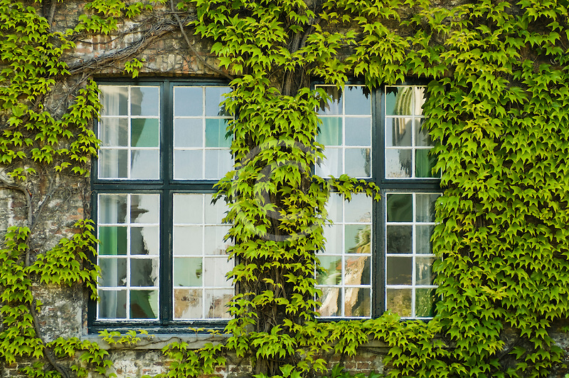 Belgium, Bruges, Window and Ivy