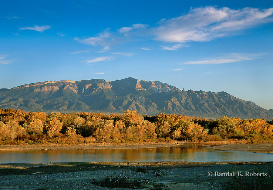 Cottonwoods in autumn gold along the Rio Grande, and Sandia Mountains, near Albuquerque, New Mexico