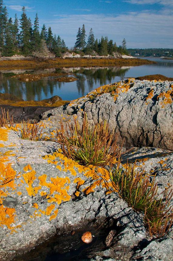 Holbrook Island Sanctuary, Brooksville, Maine, US