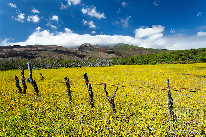 Moloka'i Mountains with yellow grassy field and barbed wire fence