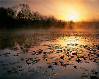 Foggy sunrise at the Beaver Marsh; Cuyahoga Valley National Park, OH