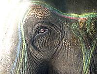 Elephant portrait focusing on eye