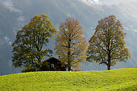 Alpine Pastures with Autumn Trees - Grinderwald - Alps - Switzerland