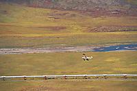Trans Alaska oil pipeline, bush plane, Atigun Canyon, Brooks Range, Alaska.