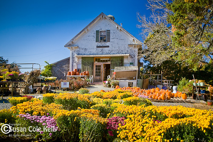Tobey Farm displays pumpkins and autumn flowers in Dennis, Cape Cod, MA, USA