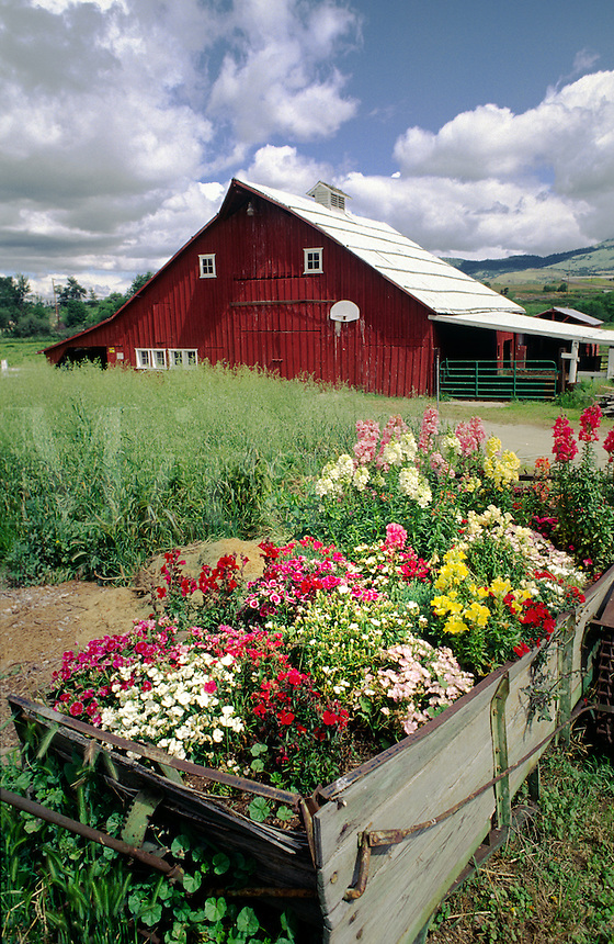 RED BARN & FLOWERS -  OREGON FARM