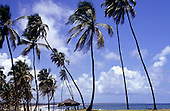 Salvador, Brazil. Tropical palm trees and thatched shelter on Rio Vermelha beach with blue sky and white clouds. Bahia State.