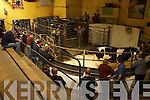Mart: Looking for a good deal at Castleisland Mart Show & Sale on Saturday for the Kerry Friesian Breeders Association