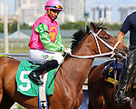 HALLANDALE BEACH, FL - DECEMBER 16:  Show Biz Liz with jockey Andre Ramgeet on board in the post parade of an undercard race. Scenes from Gulfstream Park Graded Stakes day at Gulfstream Park on December 16, 2017 in Hallandale Beach, Florida. (Photo by Liz Lamont/Eclipse Sportswire/Getty Images)