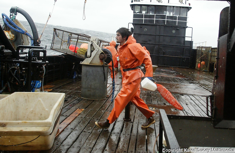 "10/20/03 crab NWS::   Crewman Erik Snyder empties bait jars and bags of herring back into the sea as the F/V Exito picks up its crab pots.  Having never been crab fishing before, Snyder received such names as ""Greenhorn"", ""Baitboy"", and ""Swabee"" (from the movie ""Captain Ron""),  and was paid a half crewshare. He did most of the jobs on the boat nobody else wanted to do including cleaning the wheelhouse windows and doing the dishes, in addition to being in charge of the bait.  When asked how he felt after his first day on the job he replied, ""This sucks.  I haven't done a damn thing right on this boat since I started."""