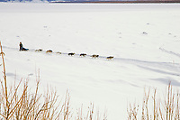 Louis Nelson Sr. on the frozen Yukon River approaching Galena on Saturday morning during the 2008 Iditarod