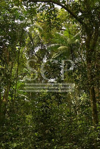 Fazenda Cagibi, Parana State, Brazil. Thick Atlantic rain forest vegetation.