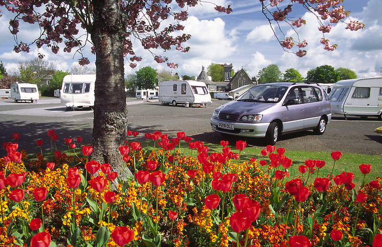 Spring flowers at caravan park beside Carlingwark Loch Castle Douglas Scotland UK
