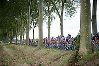 peloton through the trees<br /> <br /> 2014 Tour de France<br /> stage16: Carcassonne - Bagnères-de-Luchon (237km)