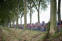 peloton through the trees<br /> <br /> 2014 Tour de France<br /> stage16: Carcassonne - Bagn&egrave;res-de-Luchon (237km)