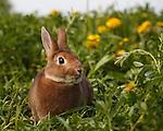 20180102 BR Rabbits