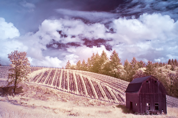 Color infrared image of barn and lone tree