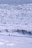Dog Team on Ice Near Shaktoolik Checkpoint