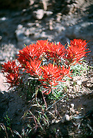 DESERT FLORA<br />