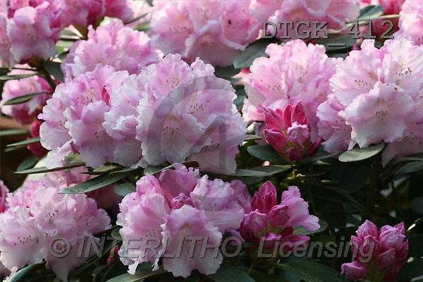 Gisela, FLOWERS, photos(DTGK412,#F#) Blumen, flores, retrato