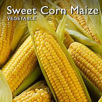 Sweet  Corn Maize | Maize Pictures Photos Images & Fotos