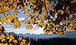 Zakopane, 2010-10-10. Jesienny widok na Tatry z Głodówki