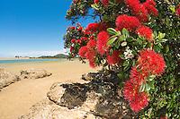 Tutukaka Coast New Zealand Images