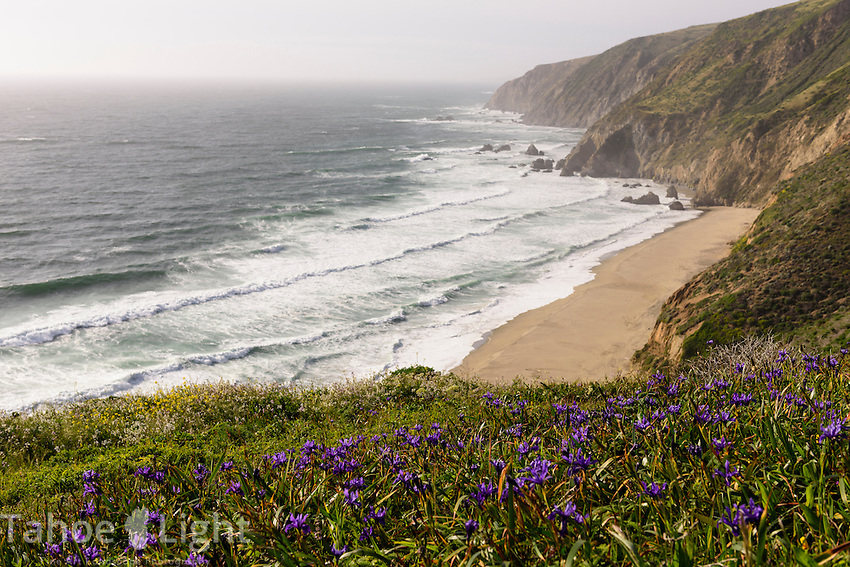 California poppies, wild irises,wild radishes and many other flowers make the 4.5 mile Tomales Point trail in Point Reyes national seashore one of the top 5 wildflower hikes in California.