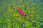 Aerial shot of workers in lilypad-filled canal by Azim Khan Ronnie