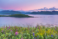 Wildflowers on Amaknak Island as sunrise glows over Hog Island in UnAlaska Bay, Aleutian Islands, Alaska
