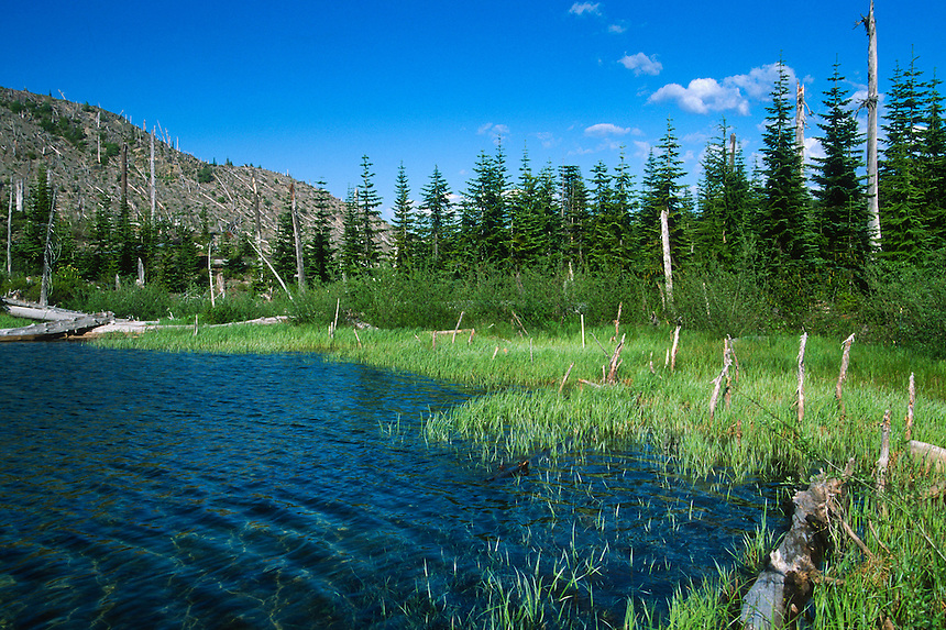 Meta Lake, Mt. St. Helens National Volcanic Monument, Washington, US