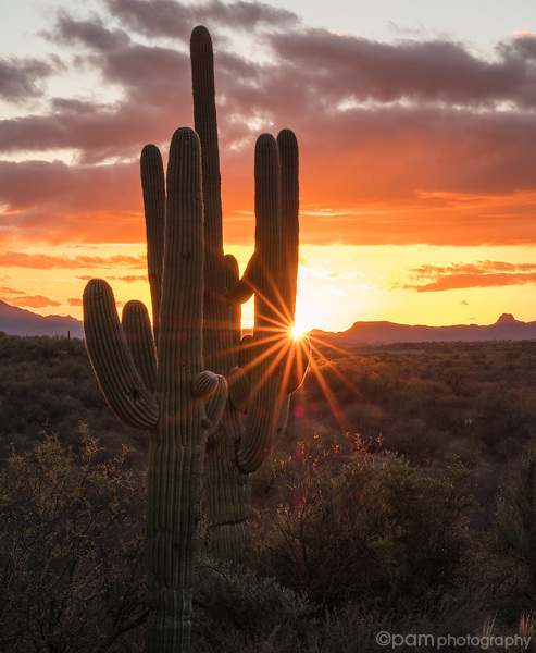 Sunset over Sonoran desert with sun star behind Saguaro