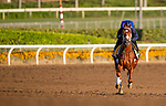 OCT 29: Breeders' Cup Classic entrant Vino Rosso, trained by Todd A. Pletcher, gallops at Santa Anita Park in Arcadia, California on Oct 29, 2019. Evers/Eclipse Sportswire/Breeders' Cup