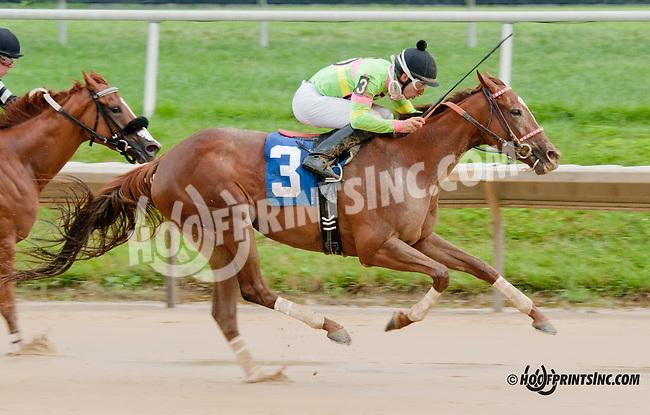 Briar Mojo winning at Delaware Park on 8/1/13
