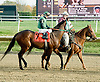 Not Abroad before The Brandywine Stakes at Delaware Park on 10/30/10