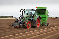 Planting daffodils in the Lincolnshire Fens<br /> Picture Tim Scrivener 07850 303986