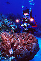 Scuba diver with underwater video camera, shooting video of sponge, Bahamas Bank, BAHAMAS.