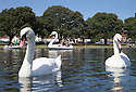 31/07/15<br /> <br /> As summer weather finally arrives, people flock to Swan-around in boats on Southsea Canoe Lake, Hampshire.<br /> <br /> <br /> All Rights Reserved - F Stop Press.  www.fstoppress.com. Tel: +44 (0)1335 418629 +44(0)7765 242650