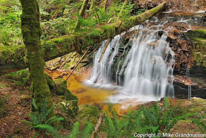 Waterfall in rain forest of Cliff Gilker Park<br /> Gibsons<br /> British Columbia<br /> Canada